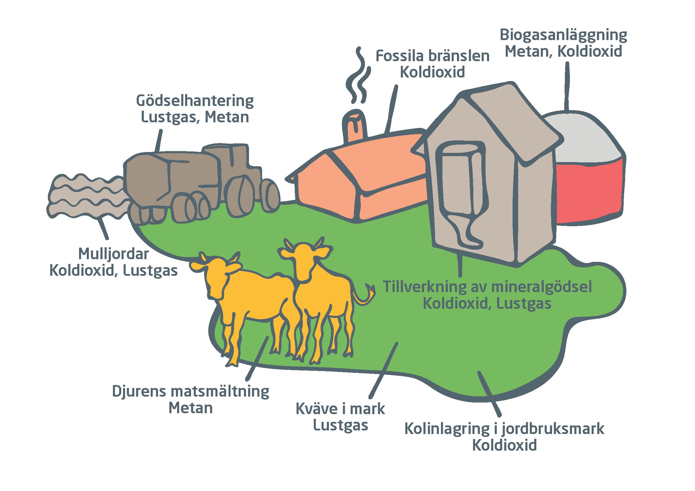 argument för köttkonsumtion